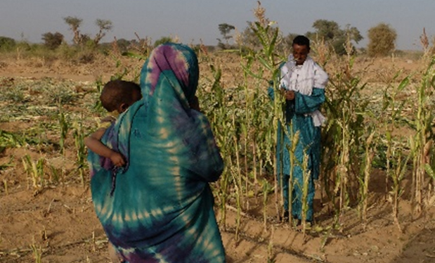 Valorizzazione dell'Oasi di Tintelloust (Niger)